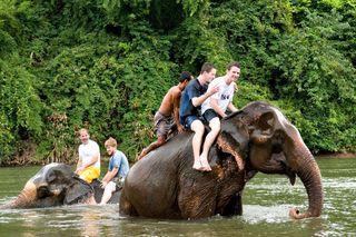 Krieger-guys-on-elephants