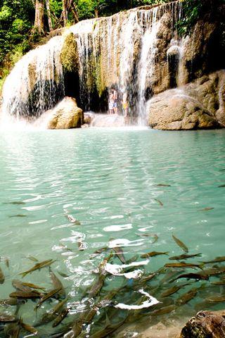 Erawan-fish