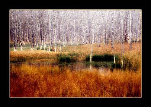 Yellowstonecreek